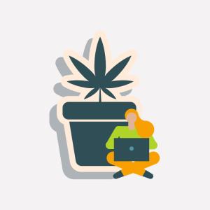 cannabis based web design